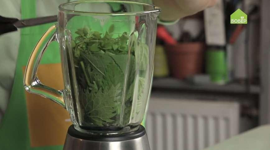 Рецепт смузи из крапивы: приготовьте, но не пейте
