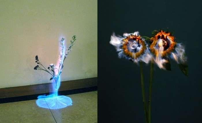 Окутанные пламенем цветы от Jiang Zhi